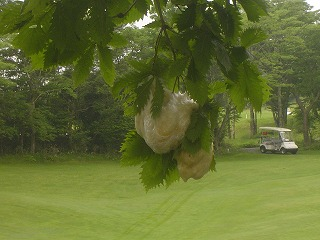 golfpark201206153